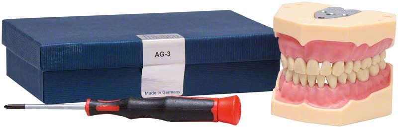 Arbeitsmodell AG-3  Stück  Modell OK\UK, 32 Zähne, AG-3